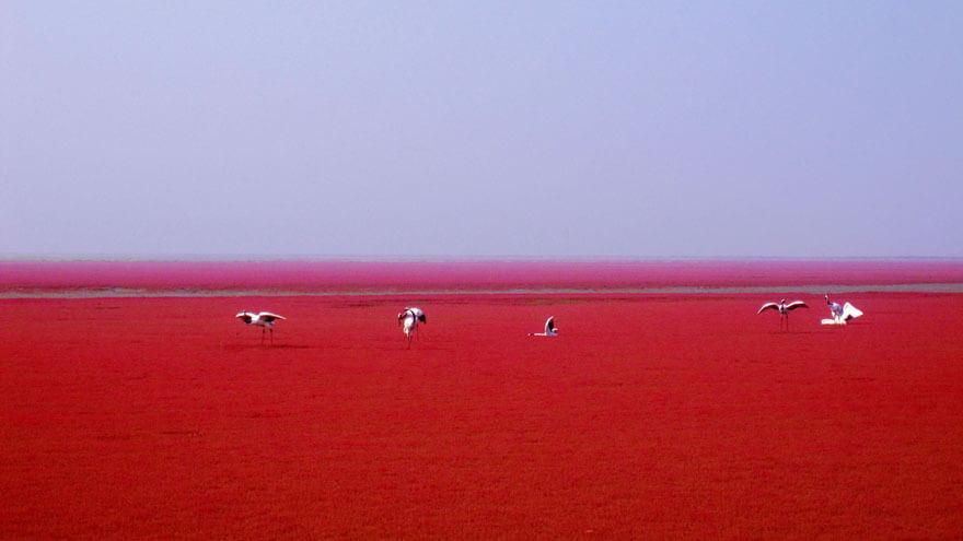 red beach china 7 (1)