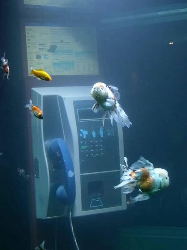 cool aquariums 12 (1)