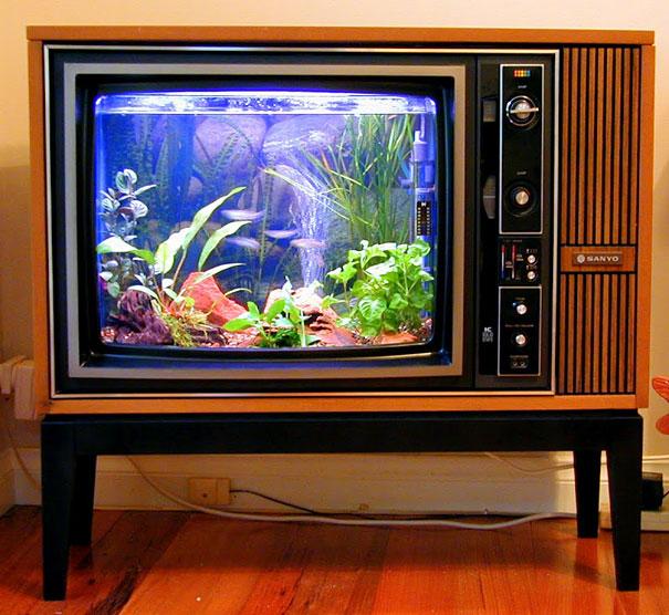 creative aquariums 20 (1)