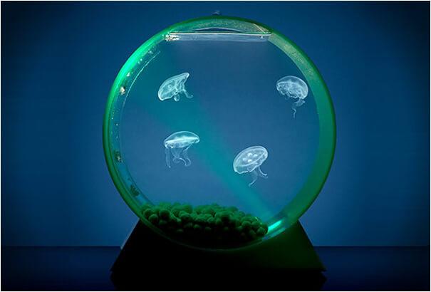 creative aquariums 29 (1)
