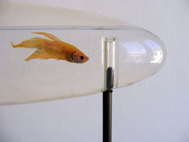 cool aquariums 5 (1)