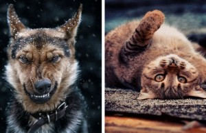beautiful animal portraits feat (1)
