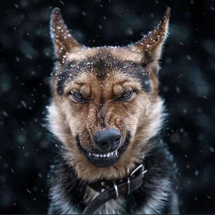 beautiful animals portraits (1)