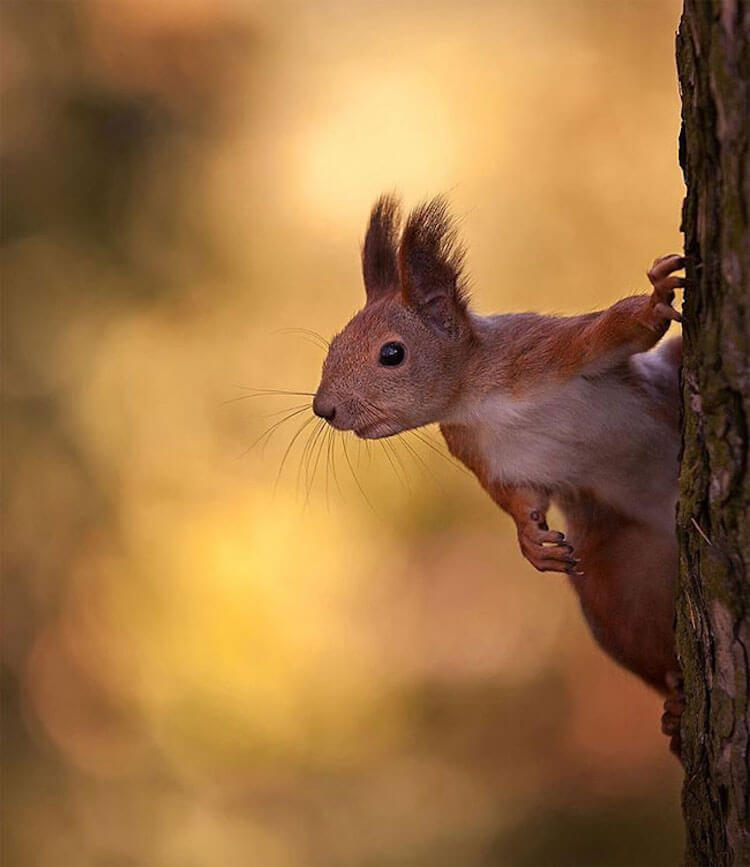 beautiful animals portraits 10 (1)