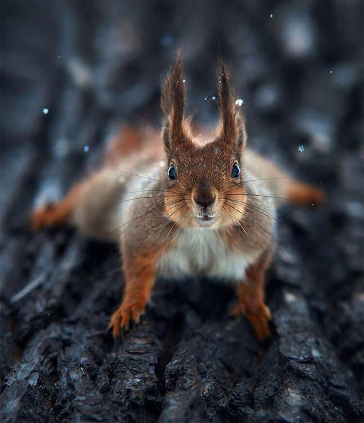 beautiful animals portraits 4 (1)