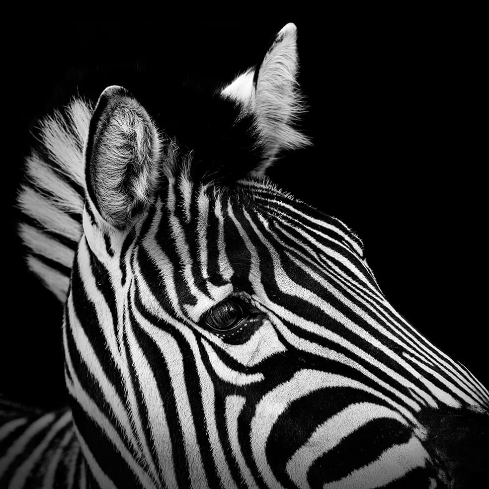 These Black And White Animals By Lukas Holas Are Just ...