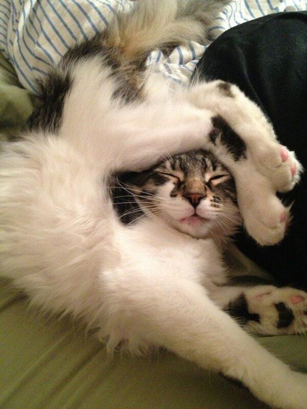 cats who have failed as a cat 30