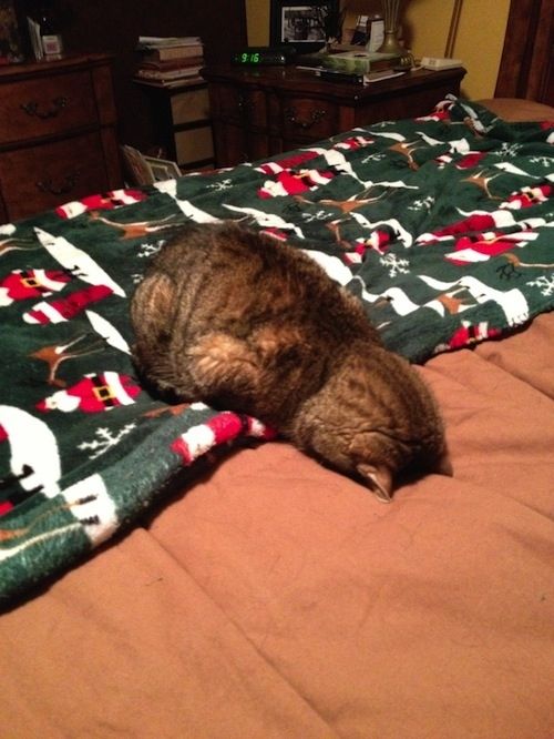 cats who are just weird animals 5