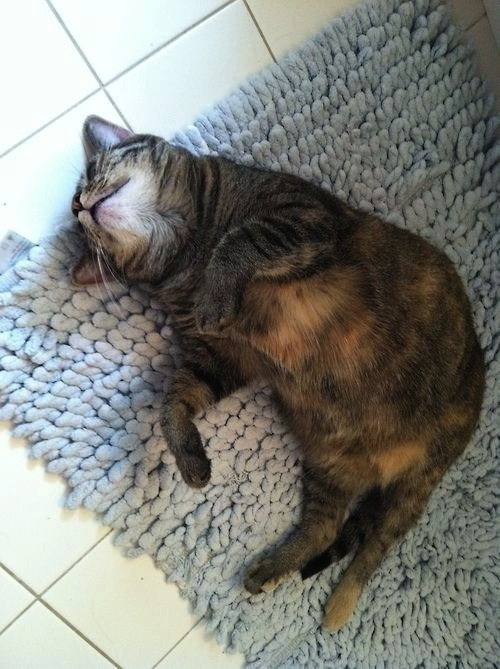 cats who are just weird animals 8