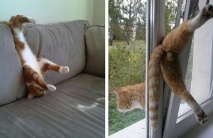 cats who forgot how to cat feat (1)