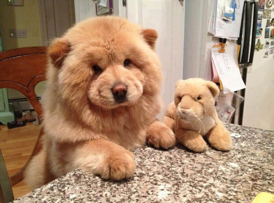 fat puppies 15 (1)