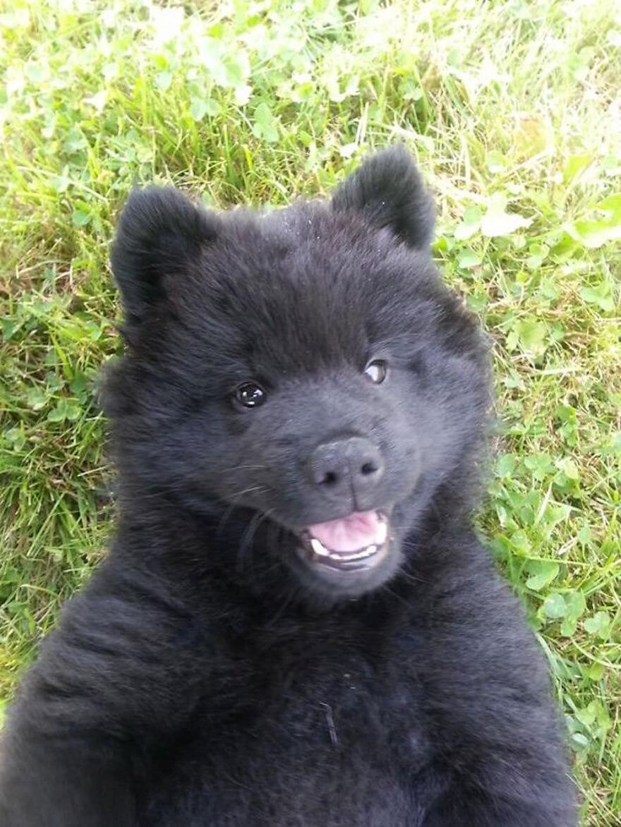 fat puppies 17 (1)