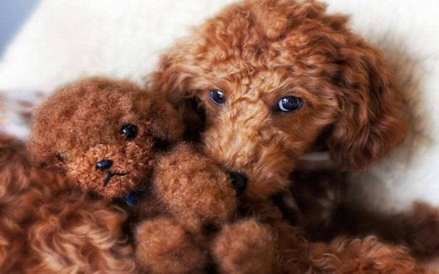 fat puppies 19 (1)
