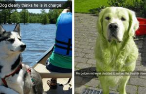 dog snapchat feat (1)