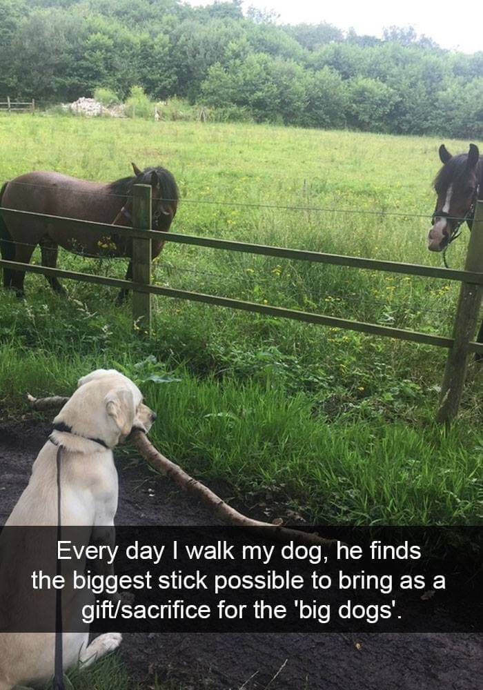 dogs on snapchat 16 (1)