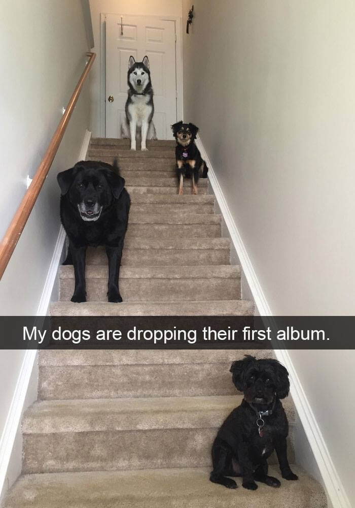 dogs on snapchat 19 (1)