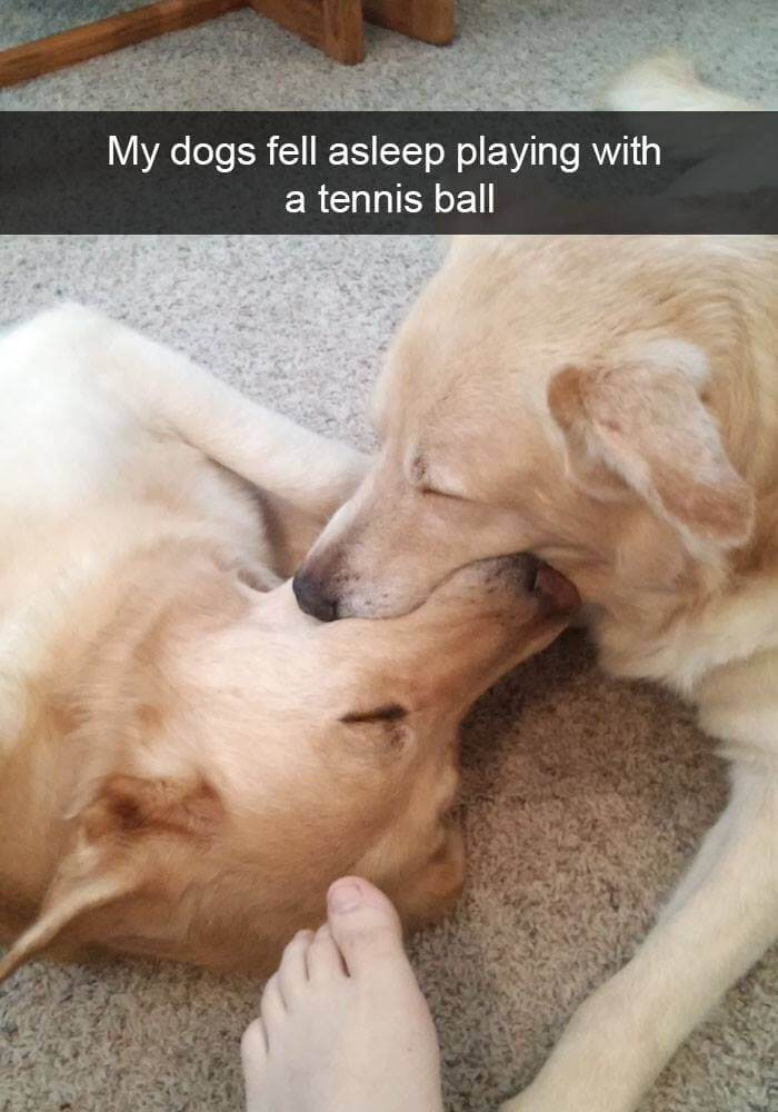 dogs on snapchat 20 (1)