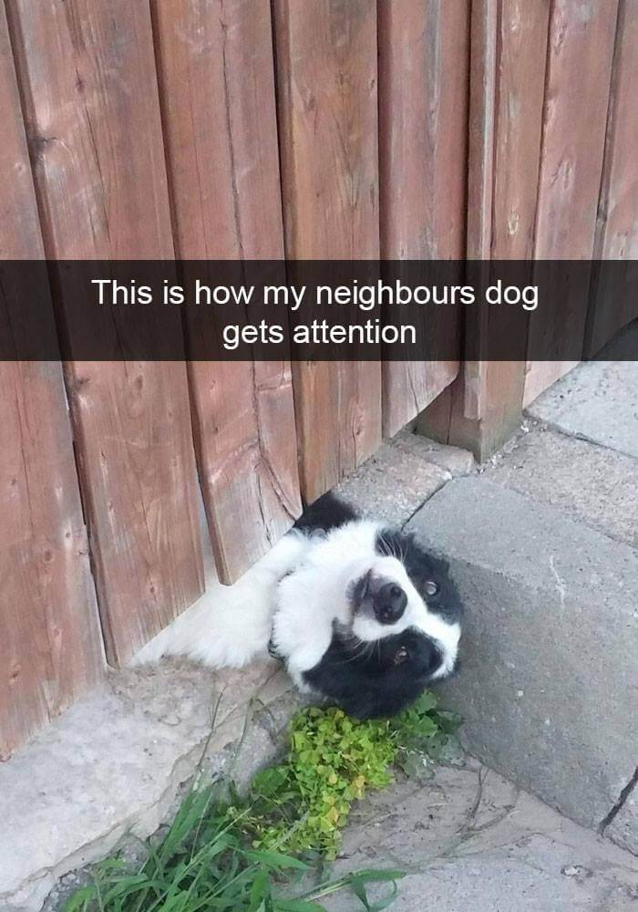dogs on snapchat 22 (1)
