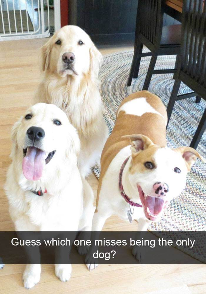 dogs on snapchat 24 (1)