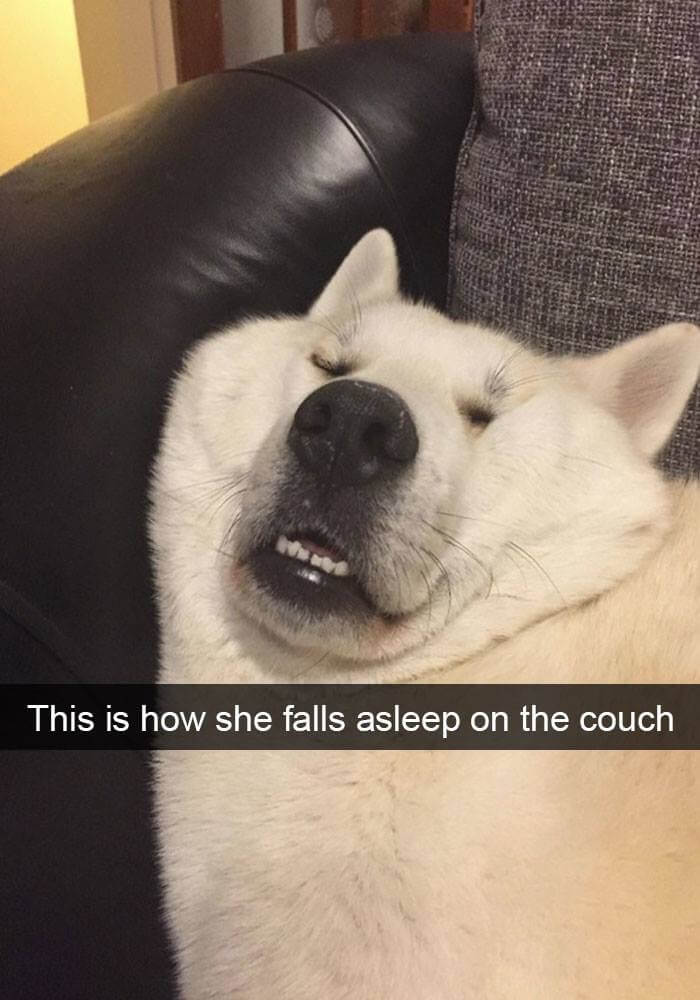 dogs on snapchat 4 (1)