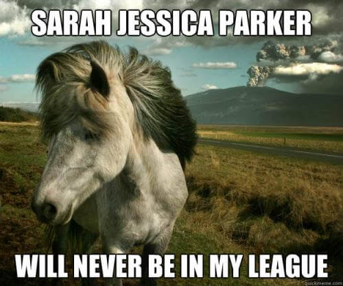 funny horse images 11 (1)