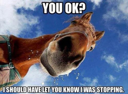 funny horse pictures 12 (1)
