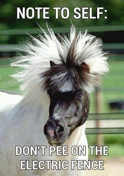 funny horse images 14 (1)