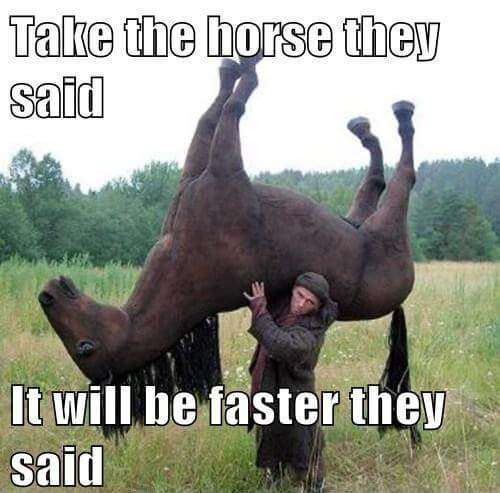 funny horse images 17 (1)