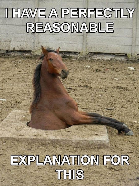funny horse images 18 (1)
