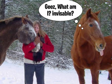 funny horse images 19 (1)