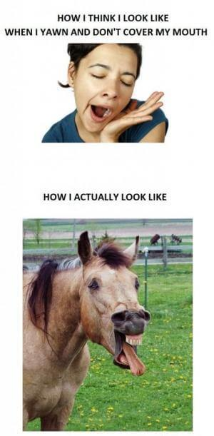 funny horse images 2 (1)