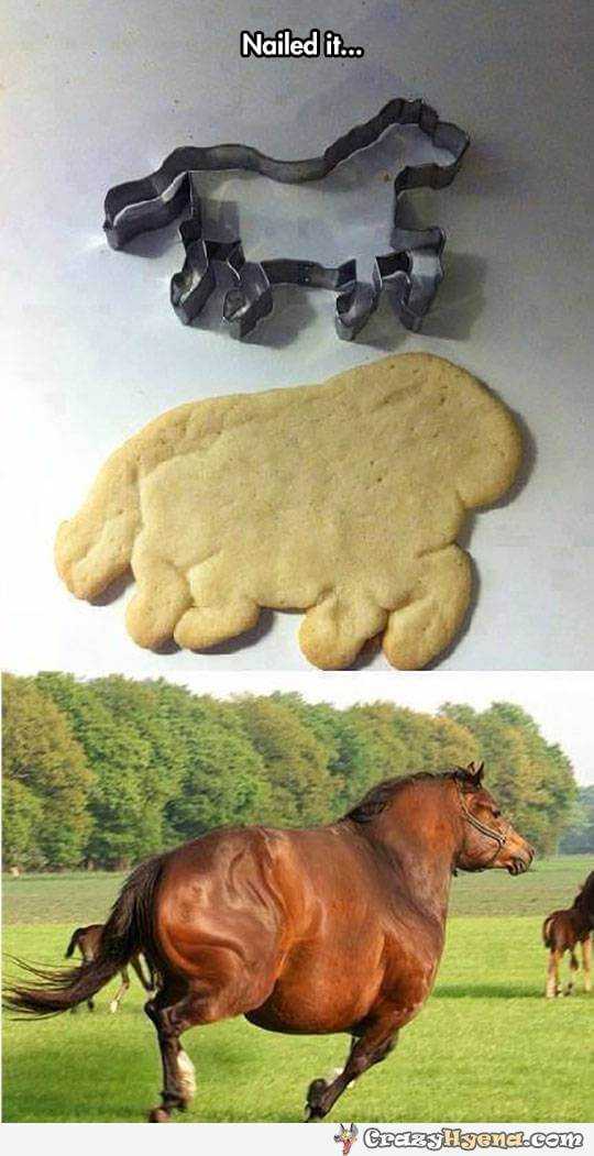 funny horse images 21 (1)