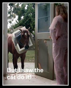 funny horse pictures 4 (1)