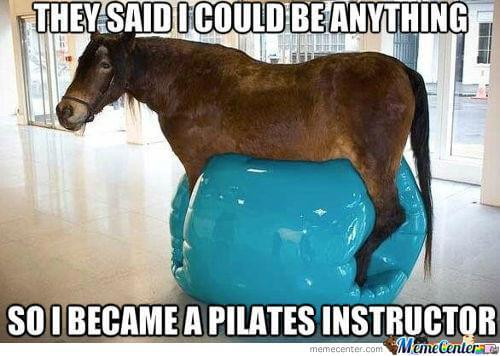 funny horse pictures 8 (1)