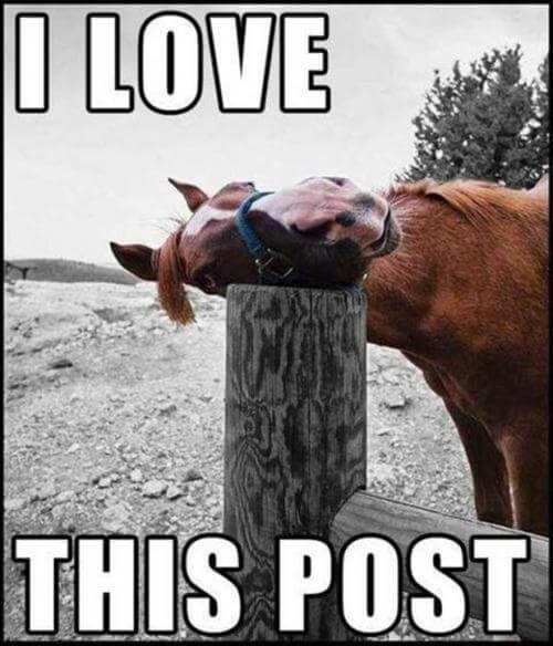 funny horse images 9 (1)