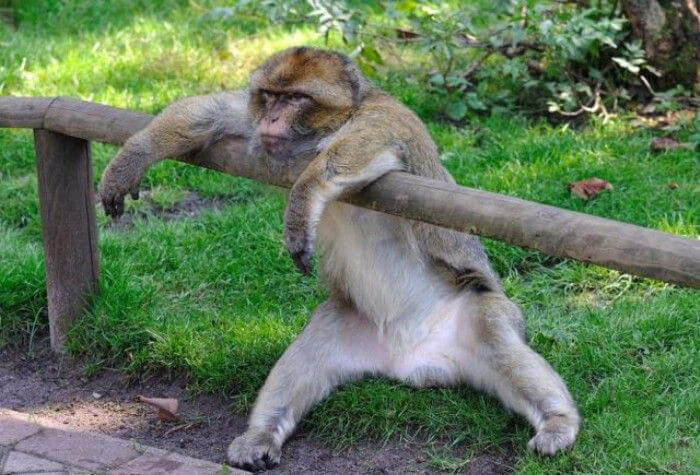 funny monkey pictures 2 (1)