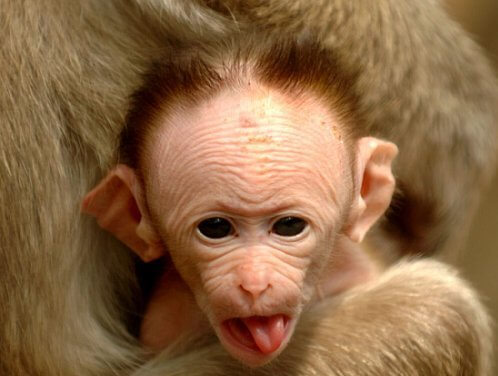 funny monkeys pics 22 (1)
