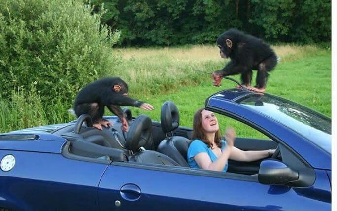 funny monkeys pics 23 (1)