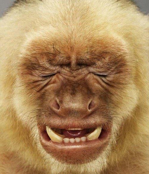 funny monkeys pics 24 (1)