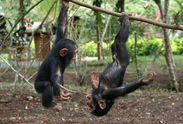 funny monkeys pics 27 (1)