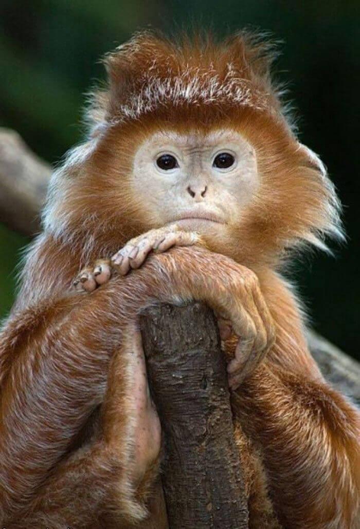 funny monkeys pics 28 (1)