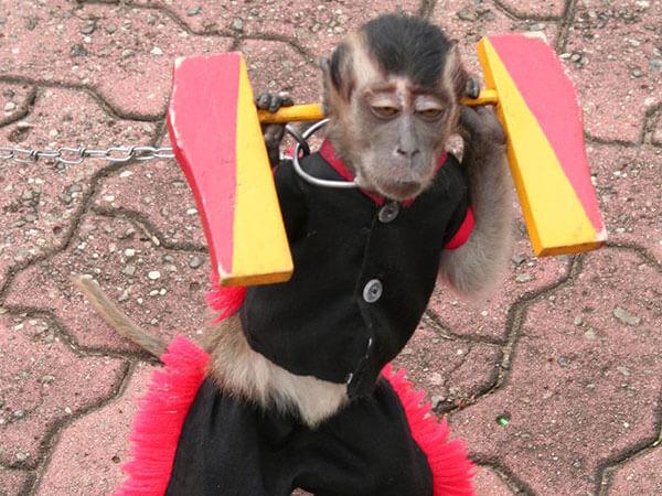 funny monkeys pics 29 (1)