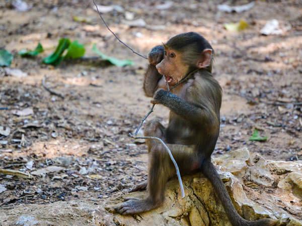 funny monkeys pics 3 (1)