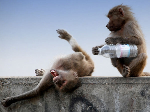 hilarious monkey pictures 33 (1)