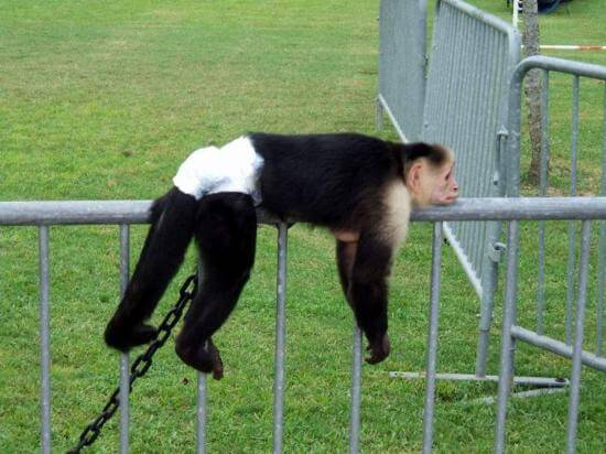 hilarious monkey pictures 39 (1)