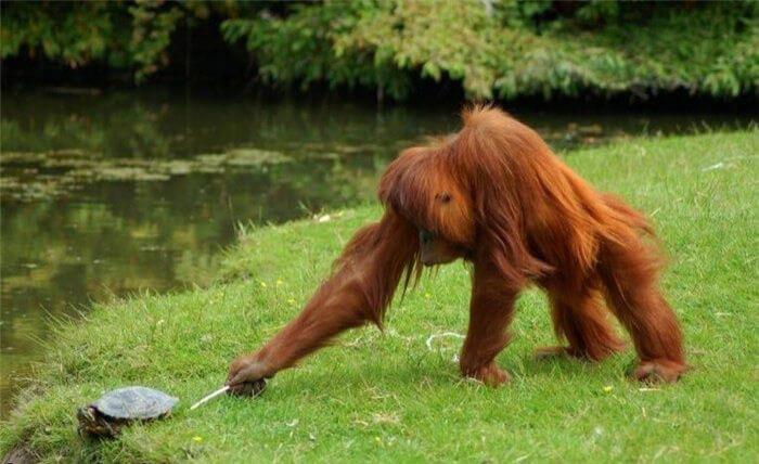 funny monkeys pics 4 (1)
