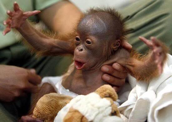 funny monkey images 41 (1)