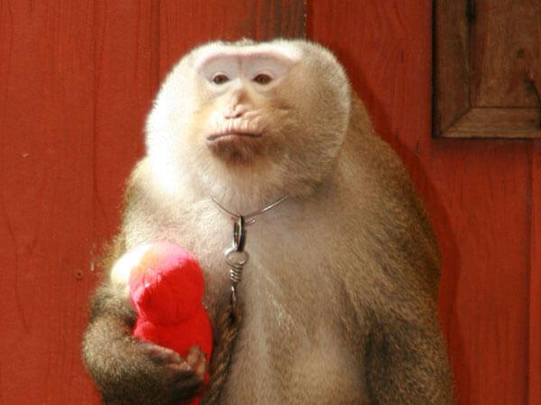 funny monkey images 42 (1)