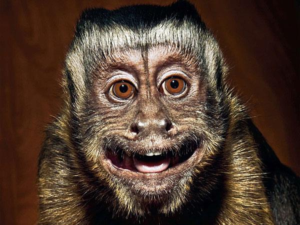 funny monkey images 43 (1)