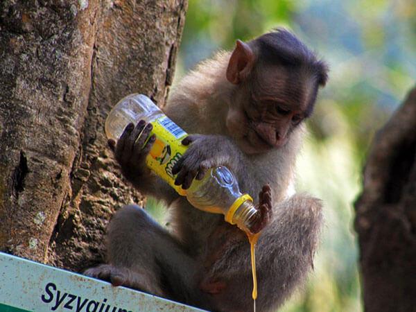 funny monkey images 44 (1)